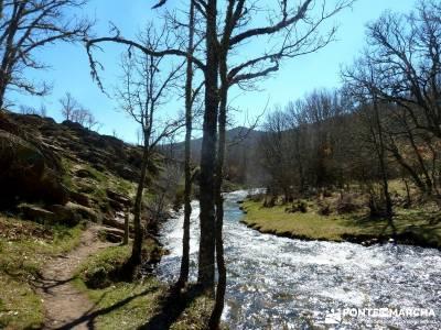 Molinos Hiruela; federacion de montaña de madrid; federacion de montaña madrid;tejo árbol
